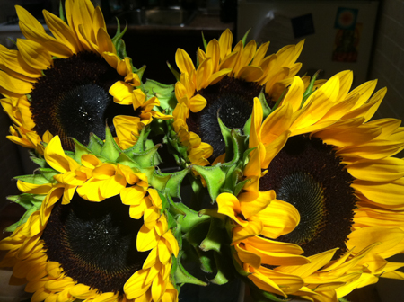 These sunflowers immediately turned my frown upside down!